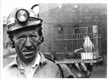 Canary_Coal_Mine